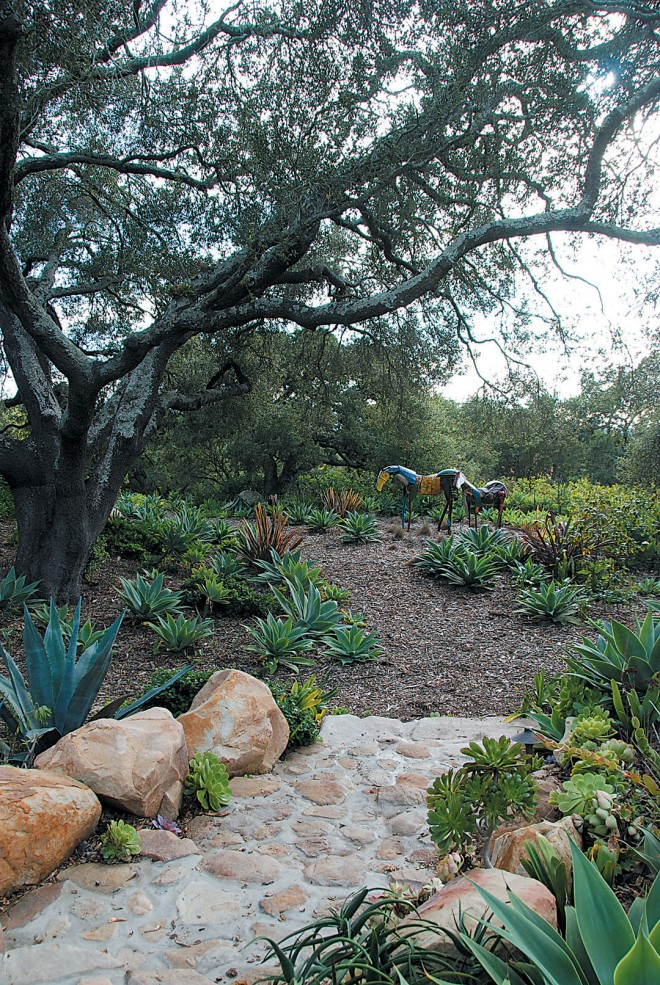 Paths lead through the oak grove past drifts of agaves and aeoniums. Photograph by Dawn Lohnas - See more at: http://www.pacifichorticulture.org/articles/the-sustaining-garden/#sthash.mpiIYUdx.dpuf