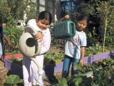 Students tending an OBUGS garden. Photographs courtesy OBUGS, except as noted