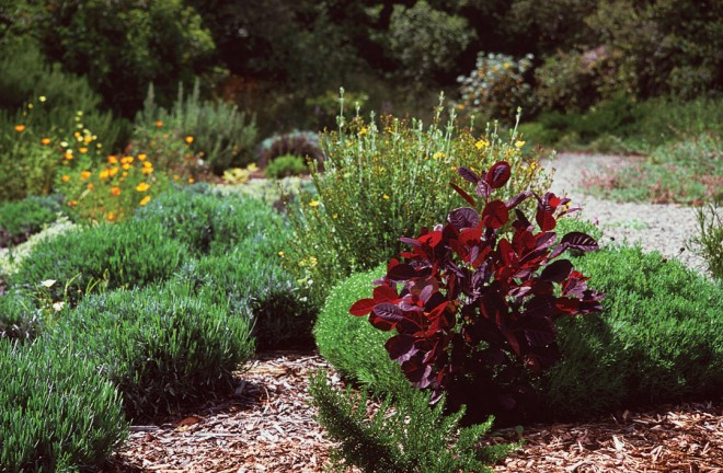A portion of the author's almost-unwatered garden in Arroyo Grande, California