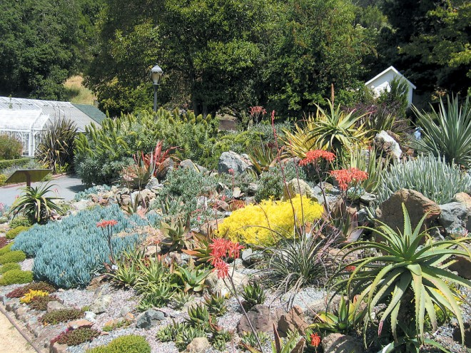 South African succulents, such as coral aloe (Aloe striata) and blue Senecio mandraliscae, feature highly in the newly planted Succulent Garden, along with euphorbias, agaves, and red yucca (Hesperaloe parviflora)