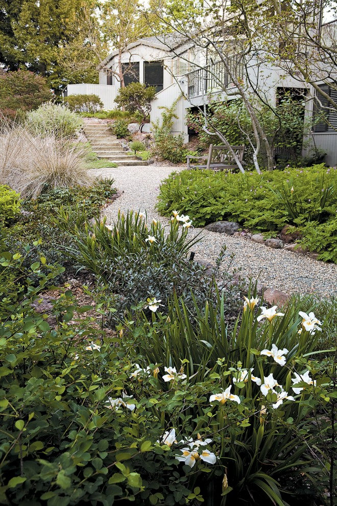 A gravel path meanders through the lower terrace, with Iris 'Canyon Snow' in the foreground and vine maples (Acer circinatum) underplanted with Western bleeding heart (Dicentra formosa) in the middle right