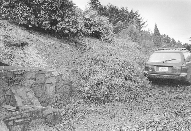 The trusty Subaru with a pile of ripped up and rolled ivy of about the same size. Author's photographs