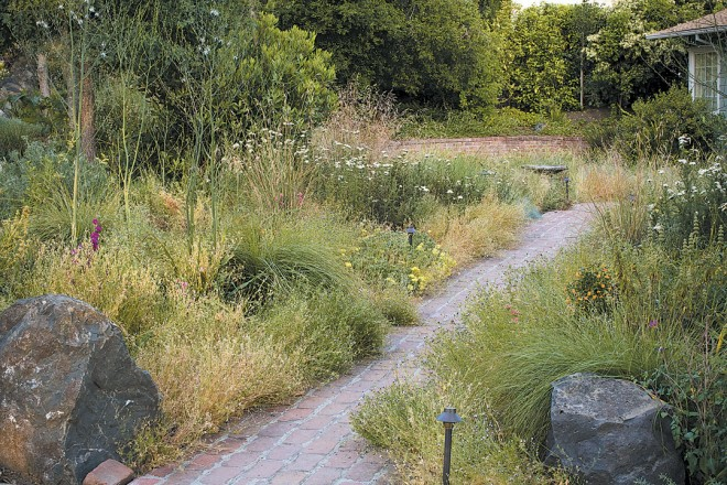 This meadow features native grasses and perennials grown from seed collected in the homeowner's local watershed. Photographs by Saxon Holt, except as noted