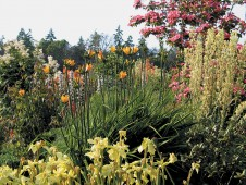 A flowery portion of the border in early summer. Photographs by Sue Milliken