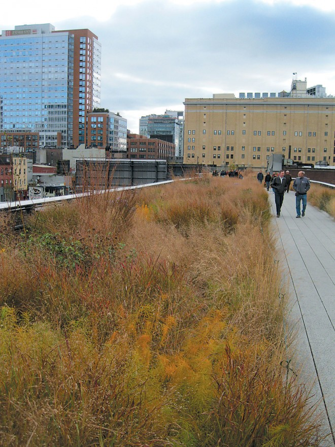 The newly opened High Line, an urban park on an abandoned, elevated rail line, where an emphasis on native plants and diversity attract all forms of wildlife into Manhattan. Photograph by RGT