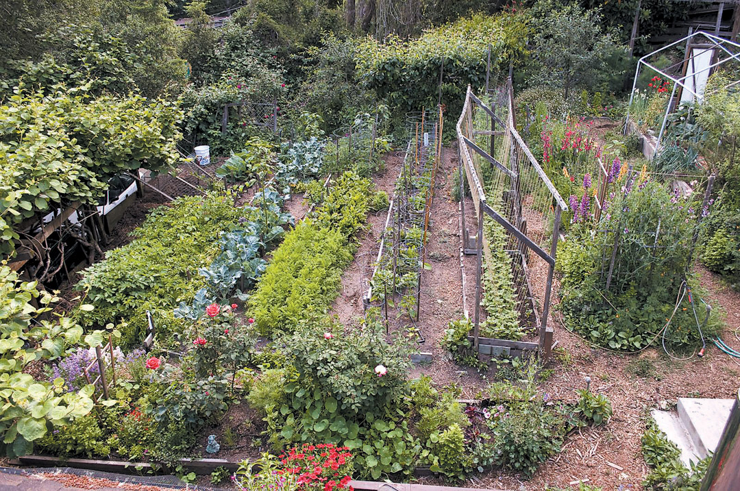 Pacific horticulture society west coast country boy - Gardening on slopes pictures ...