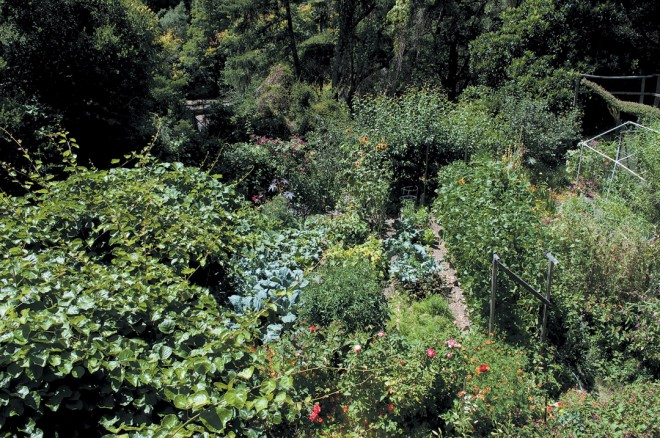 The same view in late summer; organic gardening at its abundant best