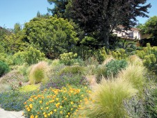 The author's exuberant new front garden, with Euphorbia characias subsp. wulfenii, Mexican feather grass (Stipa tenuissima) and other grasses, Spanish lavender (Lavandula stoechas), and California poppies (Eschscholzia californica)
