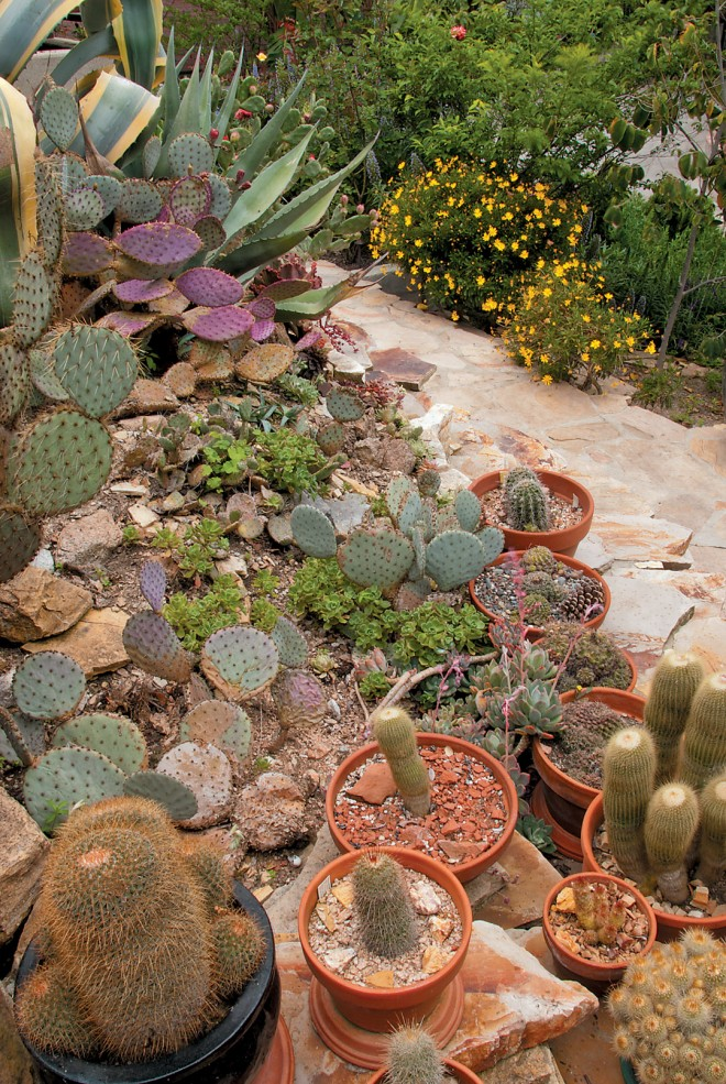 A hillside of succulents. Photographs by Deidra Walpole except as noted
