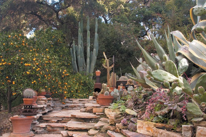 A stone staircase of Utah Sunrise flagstone with cactus and a 'Valencia' orange