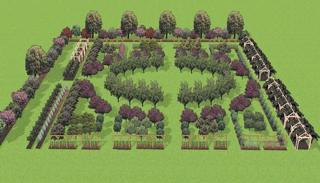Author's rendering of the Fruit Garden