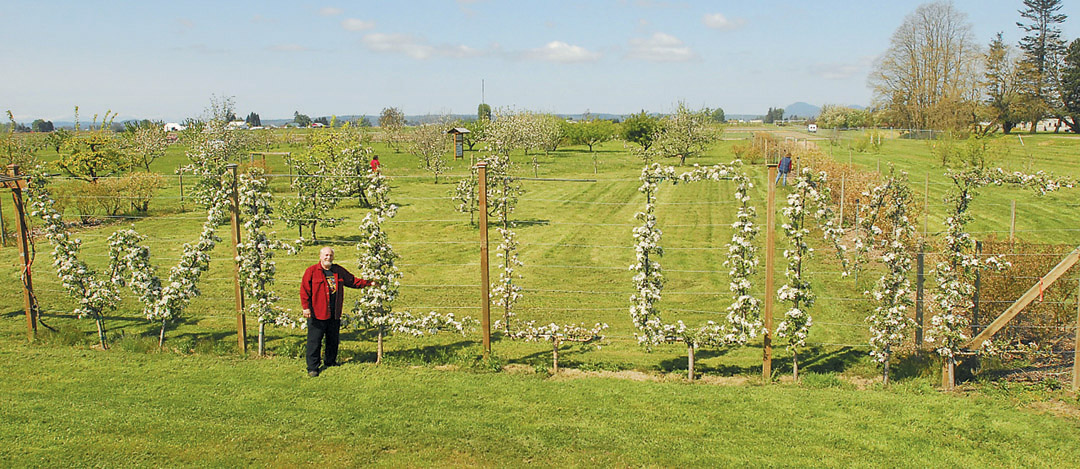 The Author In Front Of A Whimsical U201cWELCOMEu201d Espalier, Of Honeycrisp Apple  Trees