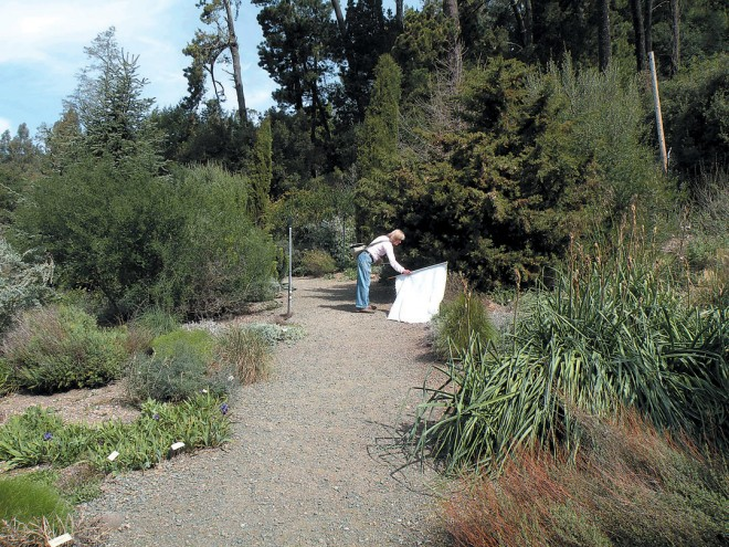Flagging vegetation for ticks at UC Botanical Garden
