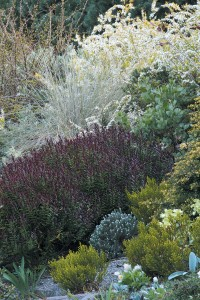 Foliage reigns on the dry hillside garden