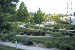 A series of arc-shaped berms separated by concrete paths represent ripples in a streambed; rocks and pebbles are important design elements throughout the landscape.