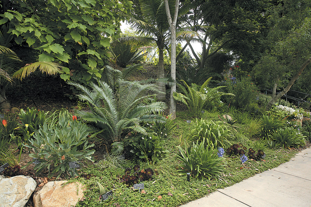 A Variety Of Perennials, Woody Plants, Cycads, And Bulbs Were Planted In The