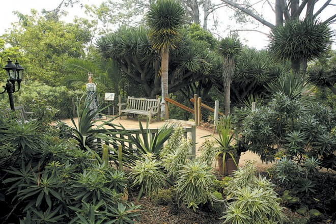 Dragon trees (Dracaena draco) and various Echium species are features of the Canary Islands Garden
