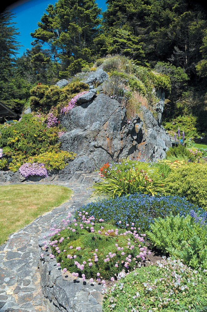 A perennial garden at the Trump family home, with sea pinks (Armeria maritima) white Silene maritima, and blue Lithodora diffusa in the foreground, California poppies (Eschscholzia californica) and a bright yellow yarrow (Achillea) at the base of the ancient sea stack.