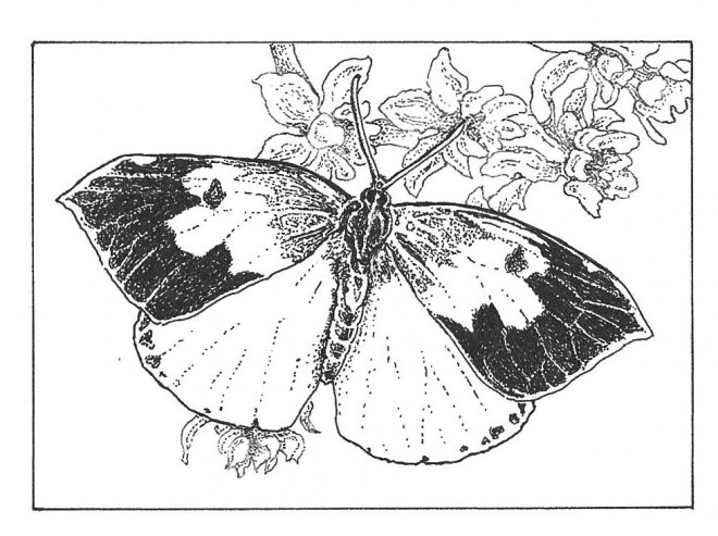 free coloring pages horticulture | California State Butterfly Coloring Page Coloring Pages