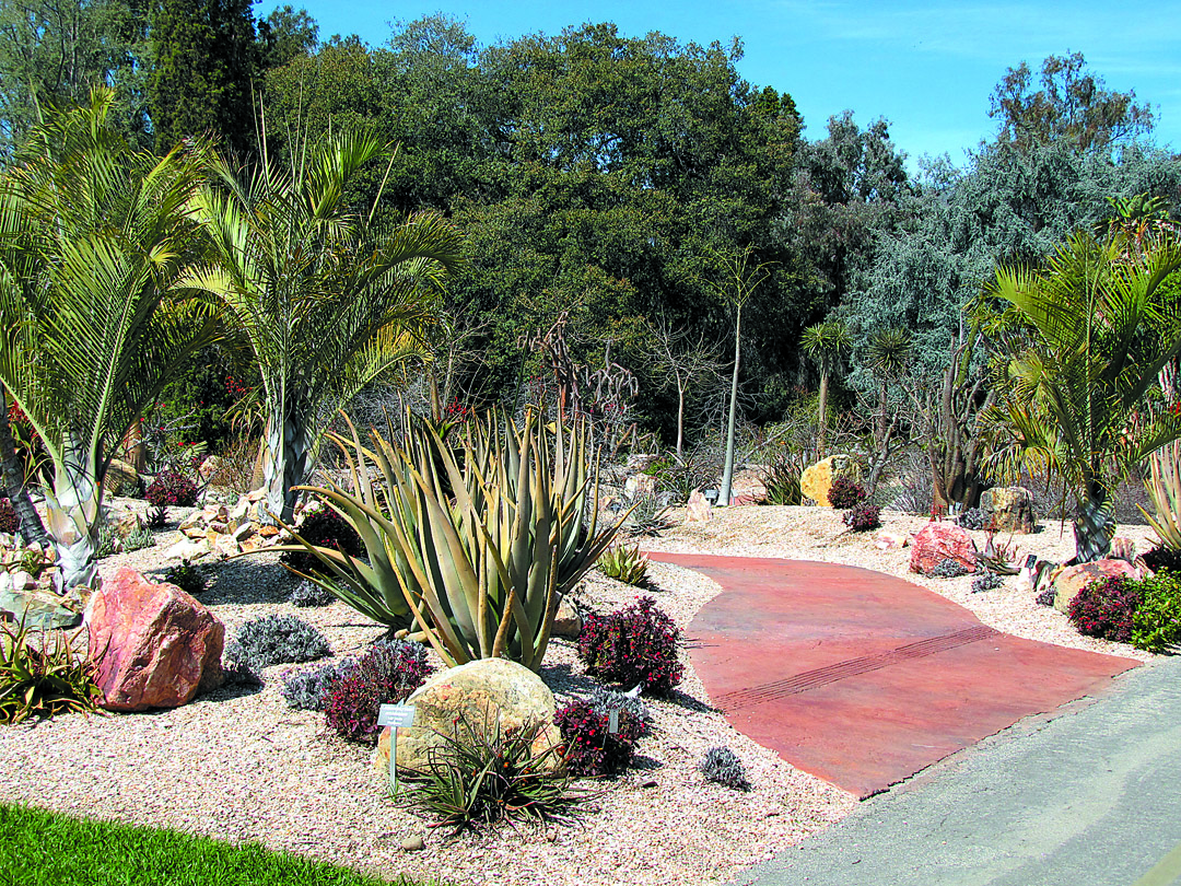 Pacific Horticulture Society The Madagascar Spiny Forest At Los - Los angeles arboretum map