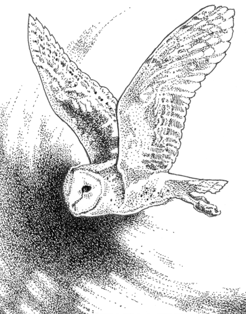 Barn Owl Wings Coloring Coloring Pages