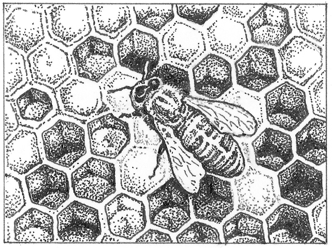Worker At The Hive