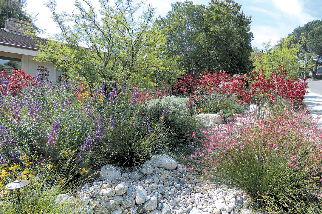 Purple garden penstemons (Penstemon hybrids), pink Gaura lindheimeri, and red kangaroo paws (Anigozanthos 'Big Red') flank a dry streambed. Photo: Judith Carlson