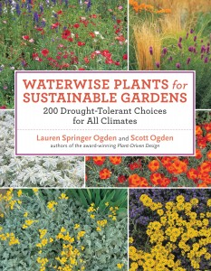waterwise plants cover