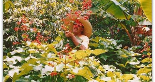Gary Hammer harvesting what looks like Jatropha