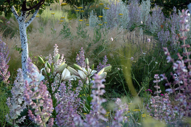 Achillea 'Moonshine', Salvia sclarea, Stipa tenuissima, and lilies among wild grasses and lavender in early June. Photo: Catriona McLean