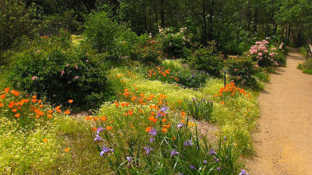 Garden Of California Native Plants. Photo: Don Mahoney