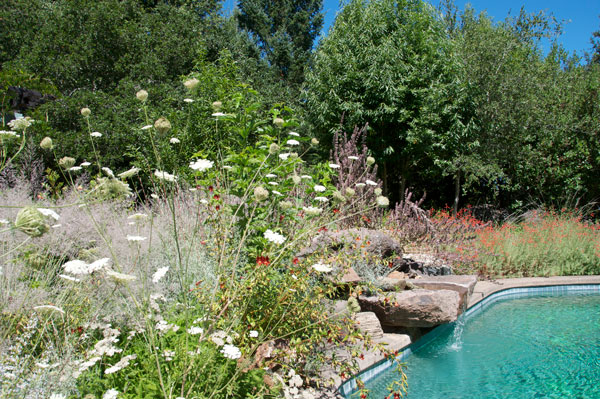 A backdrop of native trees and shrubs frames this pool at the Melissa Garden in Healdsburg, California.  Photo: Frederique Lavoipierre