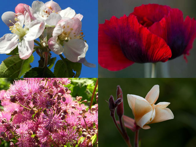 Seasonal blooms from fruit trees, annuals, and perennials provide cutting blooms throughout the year. Photos: Winnie Pitrone