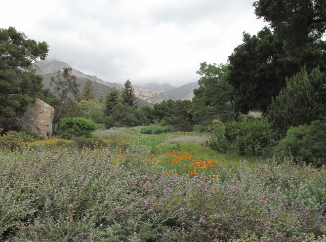 Spring bloom in the Meadow at Santa Barbara Botanic Garden. Photo: Lorene Edwards Forkner