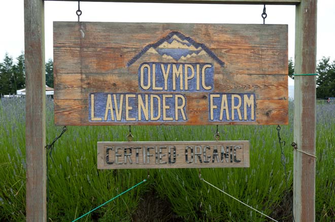 Olympic Lavender Farm offers a selection of certified organic lavender varieties. Photo: Linda Popovich