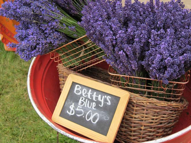 Bouquets of lavender are available for purchase at the Lavender Arts and Crafts Faire in Sequim, Washington. Photo: Linda Popovich
