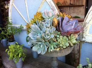 Succulents and colorful foliage create lasting late-season container compositions.