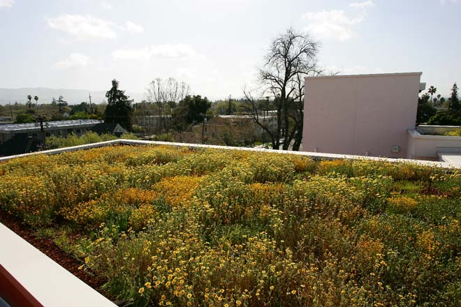 Casa Feliz green roof planting. Photo: Brighton Noing.