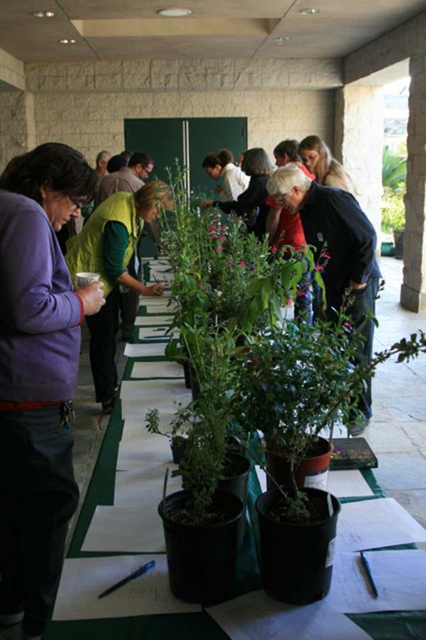 Salvia Summit II attendees peruse the plant auction table. Photo: Jennifer