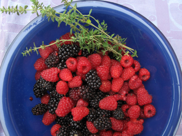 Summer berries yield a rich harvest. Photo: Lorene Edwards Forkner