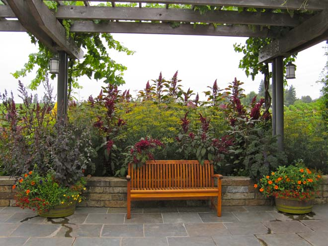 Towering bronze fennel along with 'Red Cathedral' 