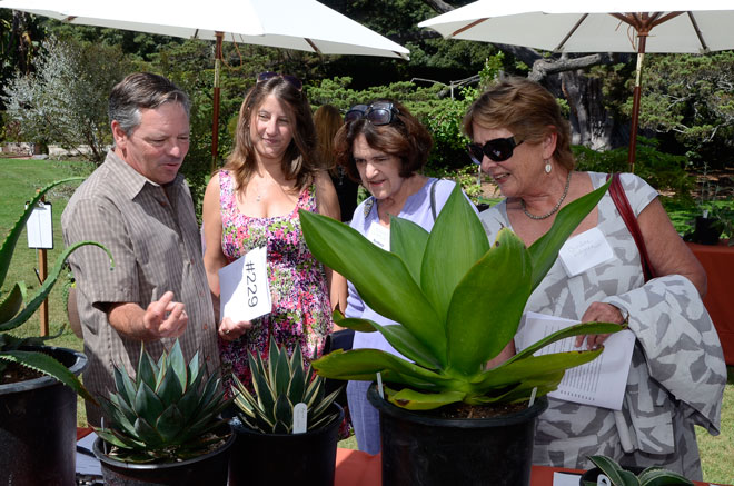 These attendees at the 2012 Lotusland auction seem to be checking out the competition while deciding which fabulous plants they 