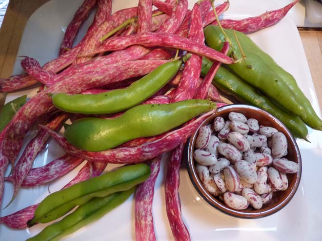 Bountiful beans. Photo: Lorene Edwards Forkner