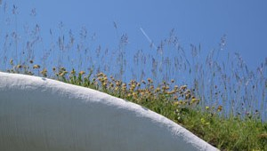 green-roof-feature