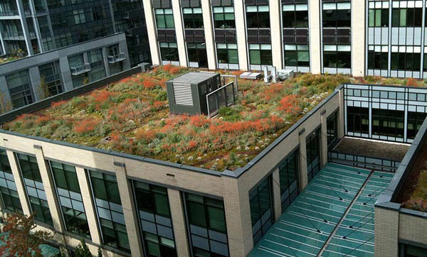 """M"" Financial living roof designed by Cistus. Photo: Sean Hogan"