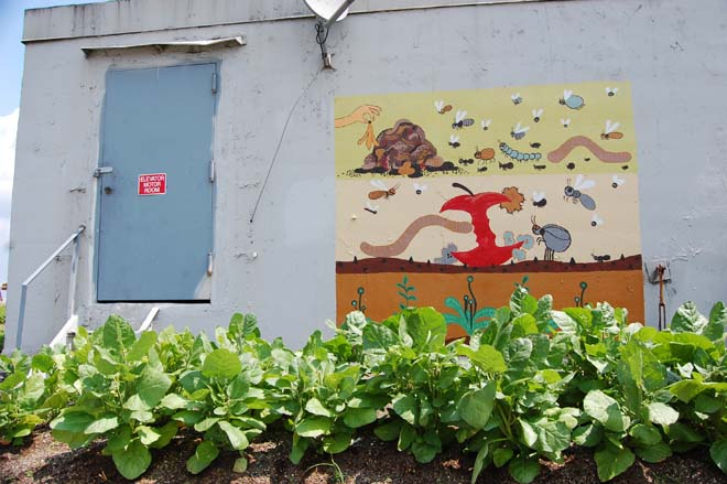 Colorful and instructive murals at the Brooklyn Grange show compost in action. Photo: Dan Corum
