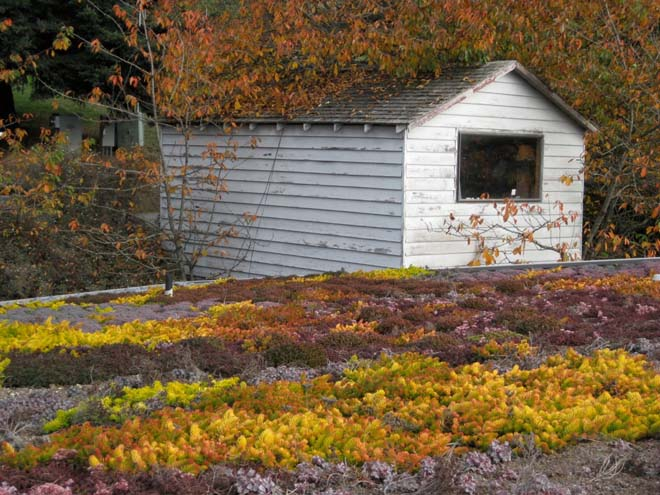 Fall color display on a North Bay rooftop landscape. Photo: Warwick Hubber
