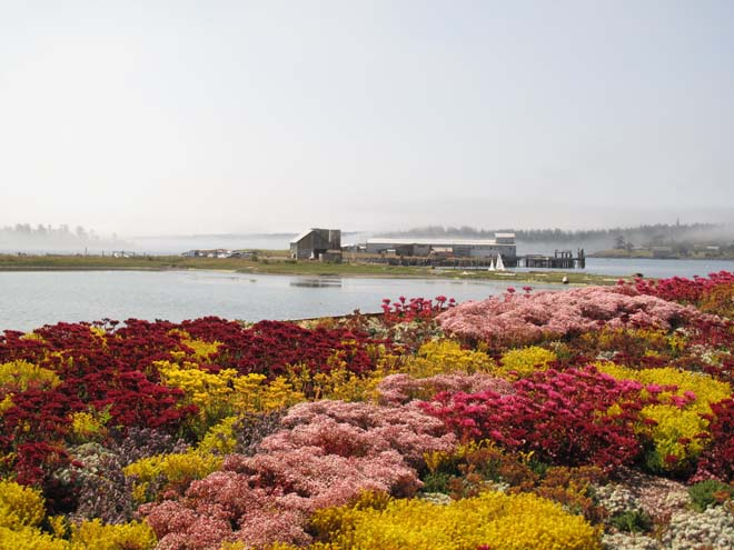 This Jackson Beach cottage sedum roof puts on a colorful display late in the season. Photo: Warwick Hubber