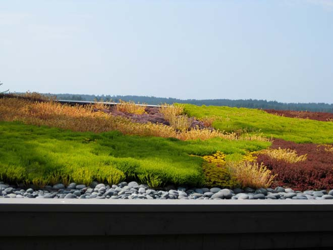With maturity the North Bay roof has developed into a graphic tapestry of rich color. Photo: Warwick Hubber