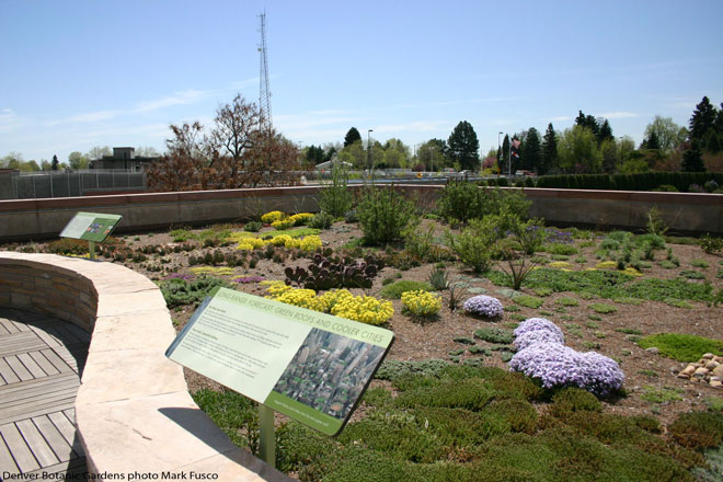 Green roof planting at Denver Botanic Gardens. Photo: Mark Fusco